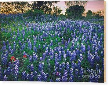 Texas Bluebonnet Field Wood Print by Inge Johnsson