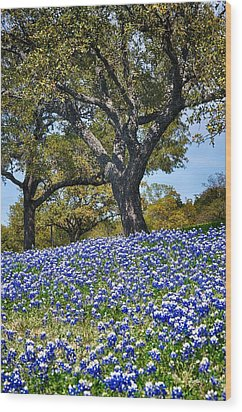 Texas Bluebonnet Hill Wood Print