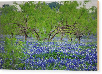 Wood Print featuring the photograph Texas Bluebonnets - Texas Bluebonnet Wildflowers Landscape Flowers by Jon Holiday