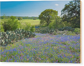 Texas Bluebonnets And Cactus Wood Print