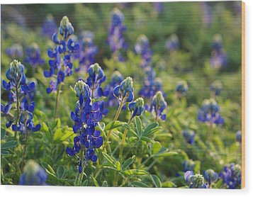 Texas Bluebonnets In Early Sun Wood Print by Lisa  Spencer