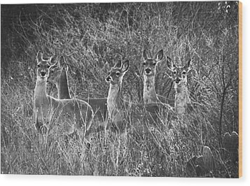 Texas Deer Wood Print