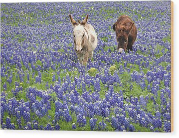 Wood Print featuring the photograph Texas Donkeys And Bluebonnets - Texas Wildflowers Landscape by Jon Holiday