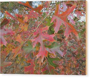 Texas Fall Colors Wood Print by Rosalie Klidies