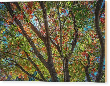 Wood Print featuring the photograph Texas Fall Glory by Ross Henton