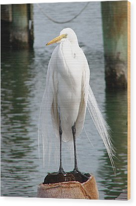 Texas Great White Egret Wood Print by Linda Cox