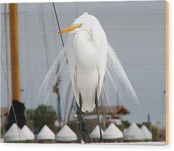 Wood Print featuring the photograph Texas Gulf Coast Great White Egret by Linda Cox