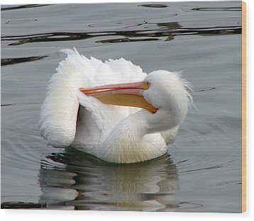 Wood Print featuring the photograph Texas Gulf Coast White Pelican by Linda Cox