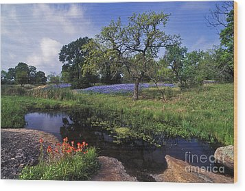 Texas Hill Country - Fs000056 Wood Print
