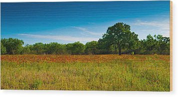 Wood Print featuring the photograph Texas Hill Country Meadow by Darryl Dalton