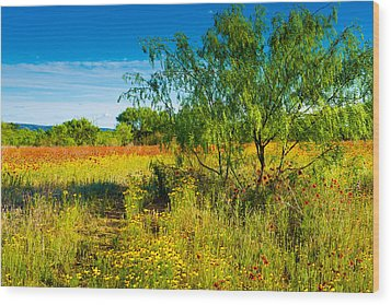 Wood Print featuring the photograph Texas Hill Country Wildflowers by Darryl Dalton