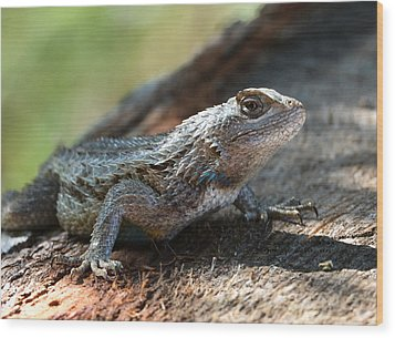 Texas Lizard Wood Print