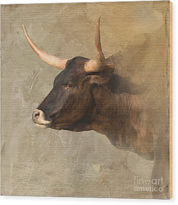 Texas Longhorn # 3 Wood Print by Betty LaRue