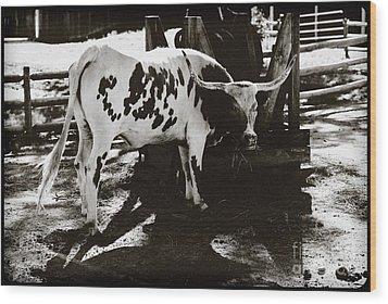 Texas Longhorn Wood Print by Liane Wright