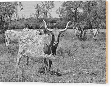 Texas Longhorns A Texas Icon Wood Print by Christine Till