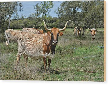 Texas Longhorns Wood Print by Christine Till