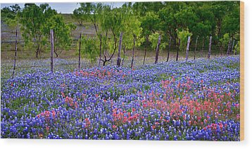 Wood Print featuring the photograph Texas Roadside Heaven -bluebonnets Paintbrush Wildflowers Landscape by Jon Holiday