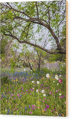 Texas Roadside Wildflowers 732 Wood Print