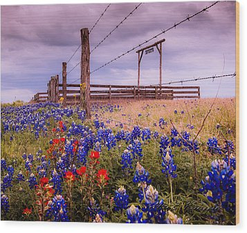 Texas Spring Fence Wood Print