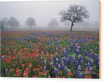 Texas Spring - Fs000559 Wood Print