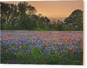 Wood Print featuring the photograph Texas Sunset - Bluebonnet Landscape Wildflowers by Jon Holiday