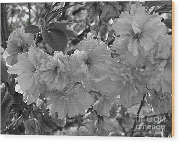 Wood Print featuring the photograph Textured Black And White Cherry Blossoms by Gena Weiser