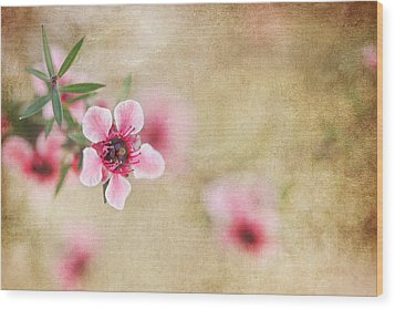 Textured Blossoms Wood Print by Terry Ellis