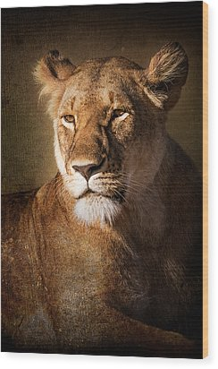 Wood Print featuring the photograph Textured Lioness Portrait by Mike Gaudaur