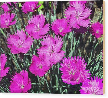 Wood Print featuring the photograph Textured Pink Daisies by Gena Weiser