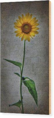 Textured Sunflower 1 Wood Print by Lori Deiter