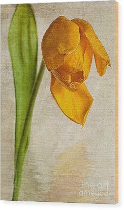 Textured Tulip Wood Print by John Edwards