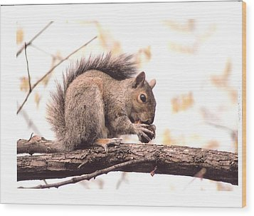 Thanksgiving Morning  Wood Print by Scott Ware