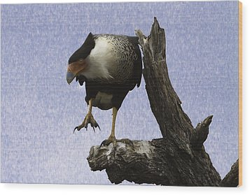 That Caracara Stare Wood Print
