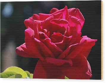 That Which We Call A Rose Wood Print by Eric Tressler