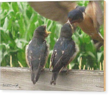 The Adult Barn Swallow Arrives With Lunch For One Wood Print by J McCombie