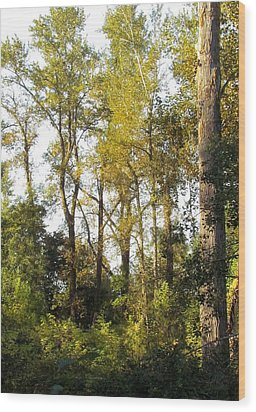 Wood Print featuring the photograph The Alder Grove by I'ina Van Lawick