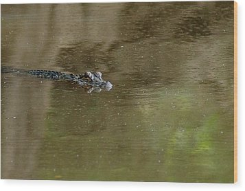 The American Alligator In The Flint River Wood Print by Kim Pate