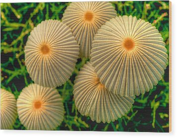 Wood Print featuring the photograph The Ants Raised Their Umbrellas by Dennis Baswell