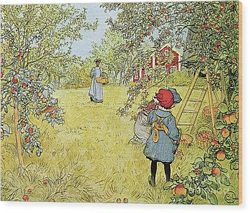 The Apple Harvest Wood Print by Carl Larsson