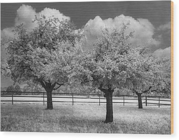 The Apple Orchard Wood Print by Debra and Dave Vanderlaan
