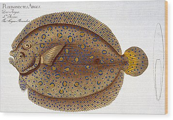 The Argus Flounder Wood Print by Andreas Ludwig Kruger