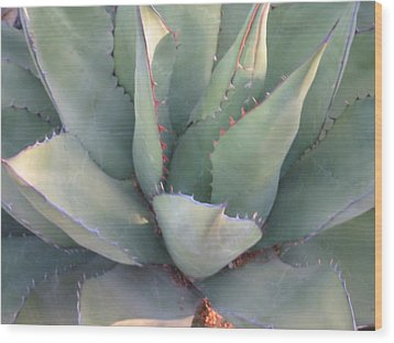 The Arizona Desert Wood Print by Jean Marie Maggi