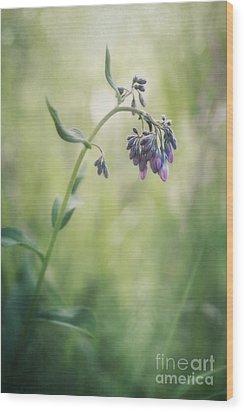 The Arrival Of Spring Wood Print by Priska Wettstein