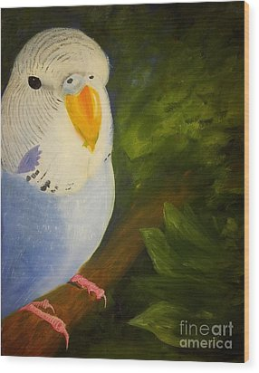 The Baby Parakeet - Budgie Wood Print