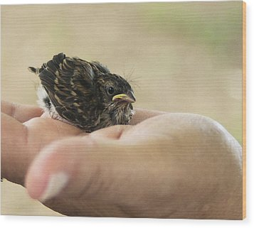 Wood Print featuring the photograph The Baby Wren Can't Fly by B Wayne Mullins