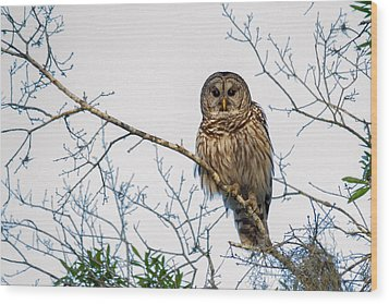 Wood Print featuring the photograph The Barred Owl by Phil Stone