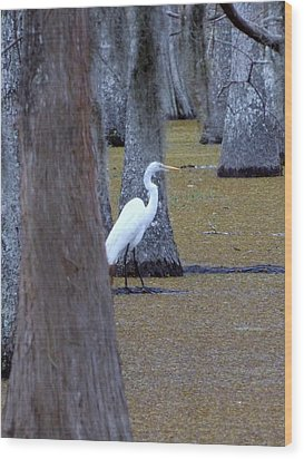 Wood Print featuring the photograph The Bayou's White Knight by John Glass
