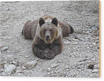 The Bear Resting Wood Print by Goyo Ambrosio