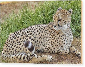 The Beautiful Cheetah Wood Print