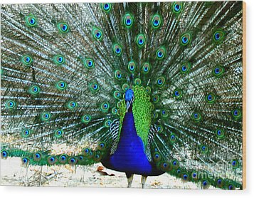 Wood Print featuring the photograph The Beautiful Plumage by Kathy  White
